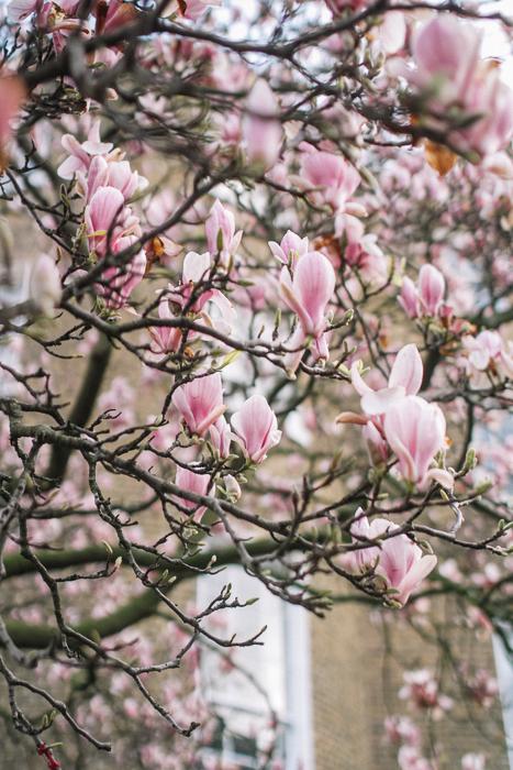 pink petals spring 2016