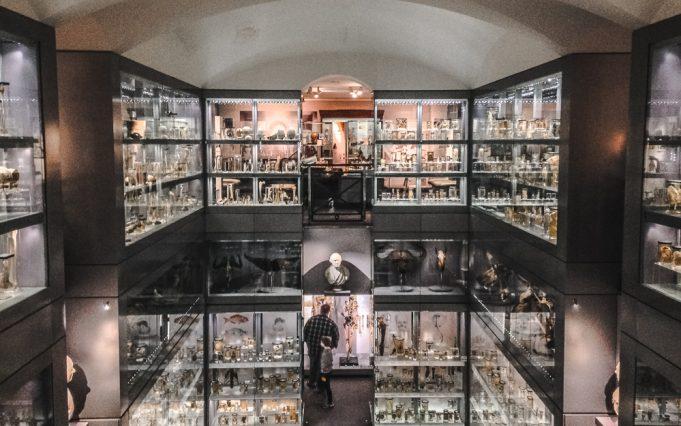Hunterian Museum - Royal College of Surgeons