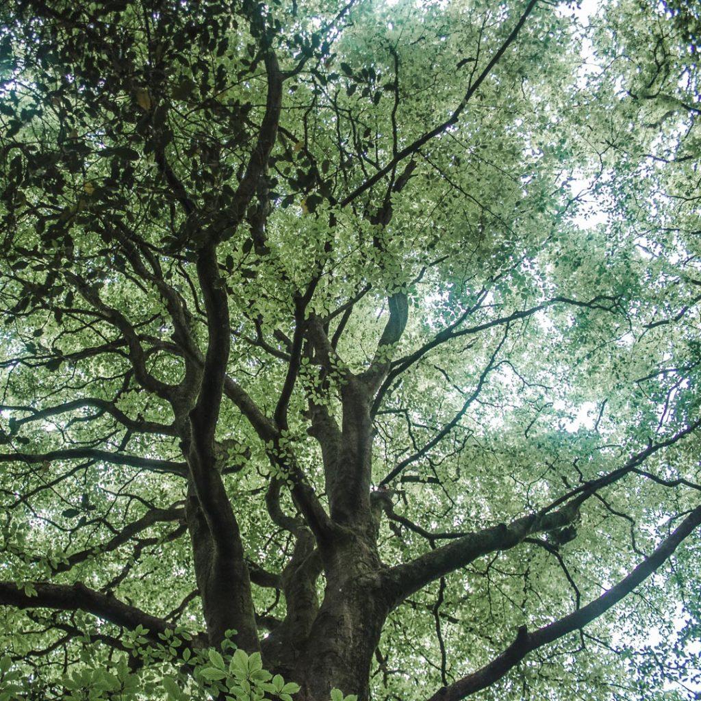 nature british uk