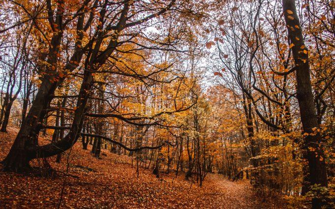 red-leaves-leeds-gledhow-park-_mg_0061