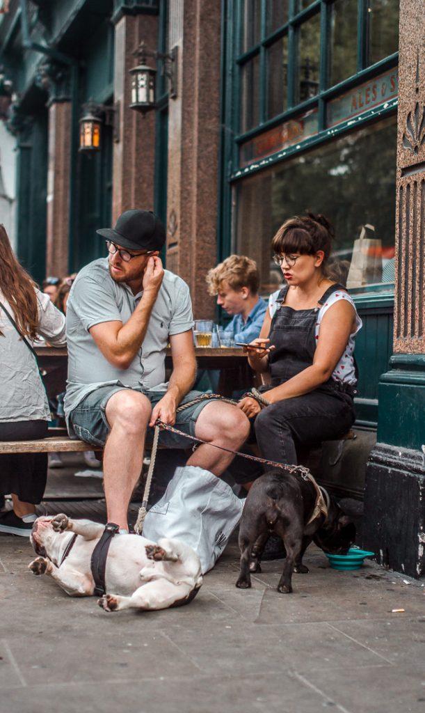 dogs playing around london