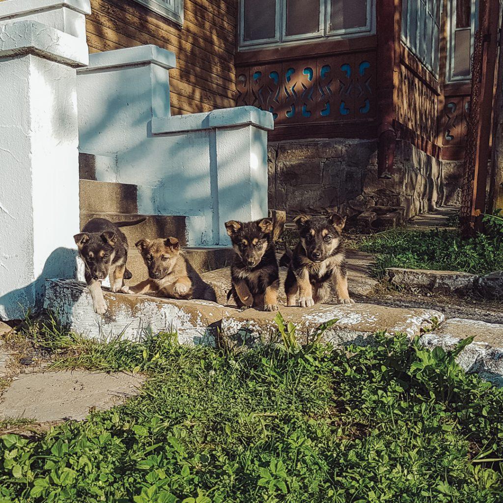 puppies ukraine