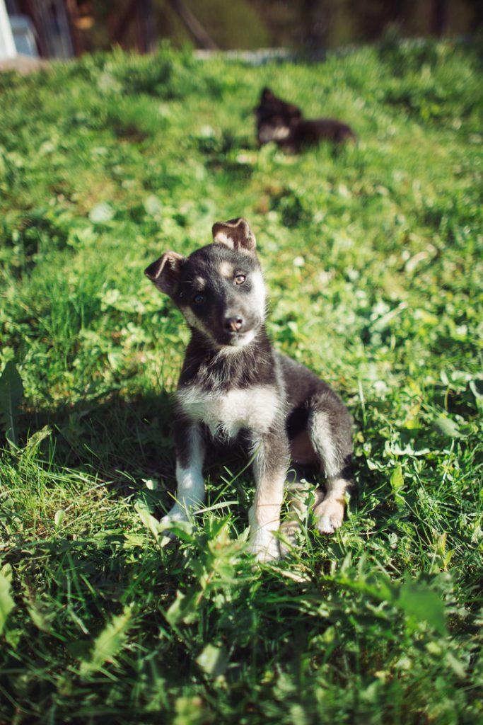 puppy ukraine