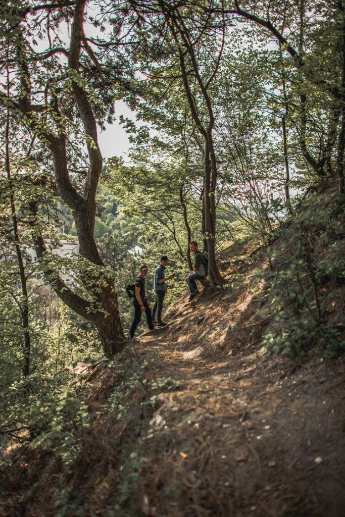 Lusa Gora лиса гора forest