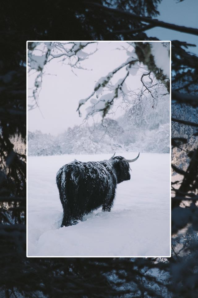 lawrence thomas photography scotland tesla