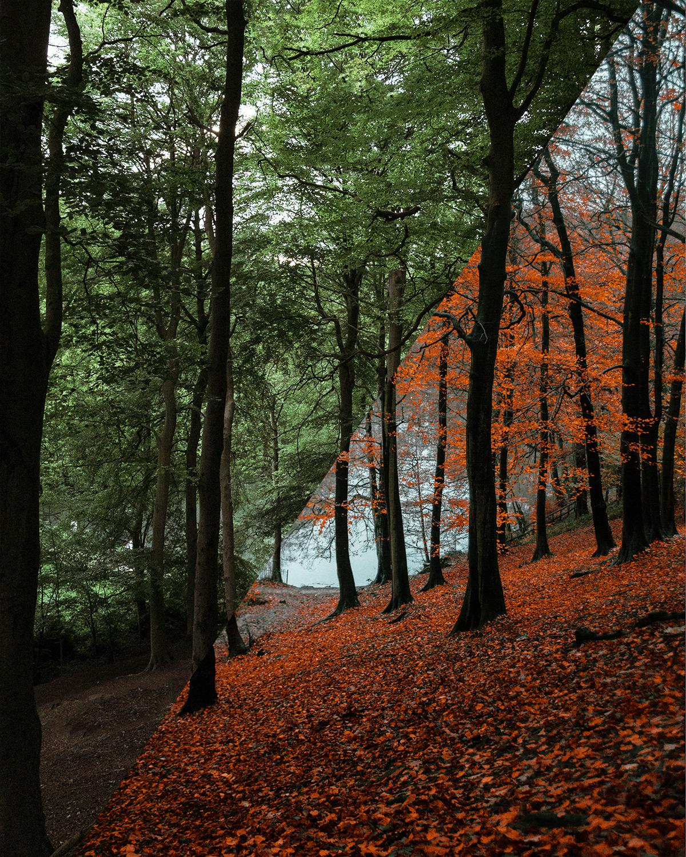 hedrow-valley-woods-leeds-1